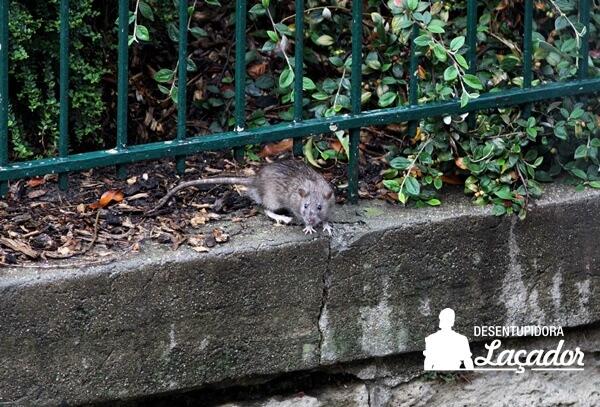 Paris fecha parques e jardins para ação de controle de ratos