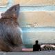 Dedetização 24 horas: conheças as doenças causadas por ratos